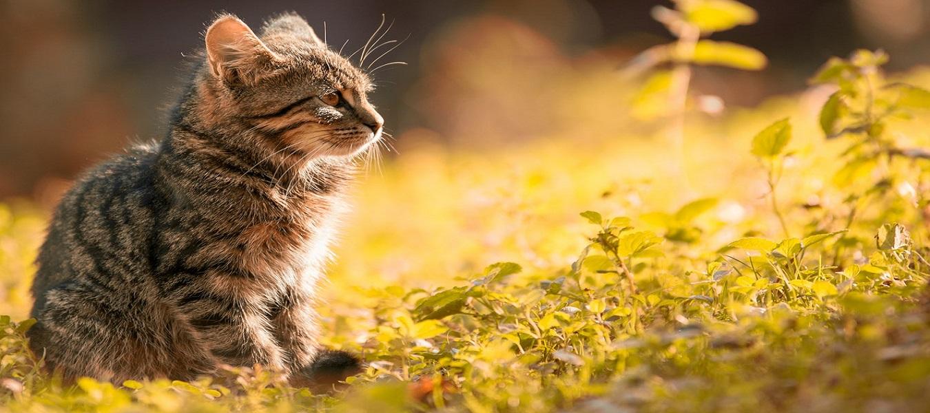 ,veterinary pet animal doctor kothrud pune